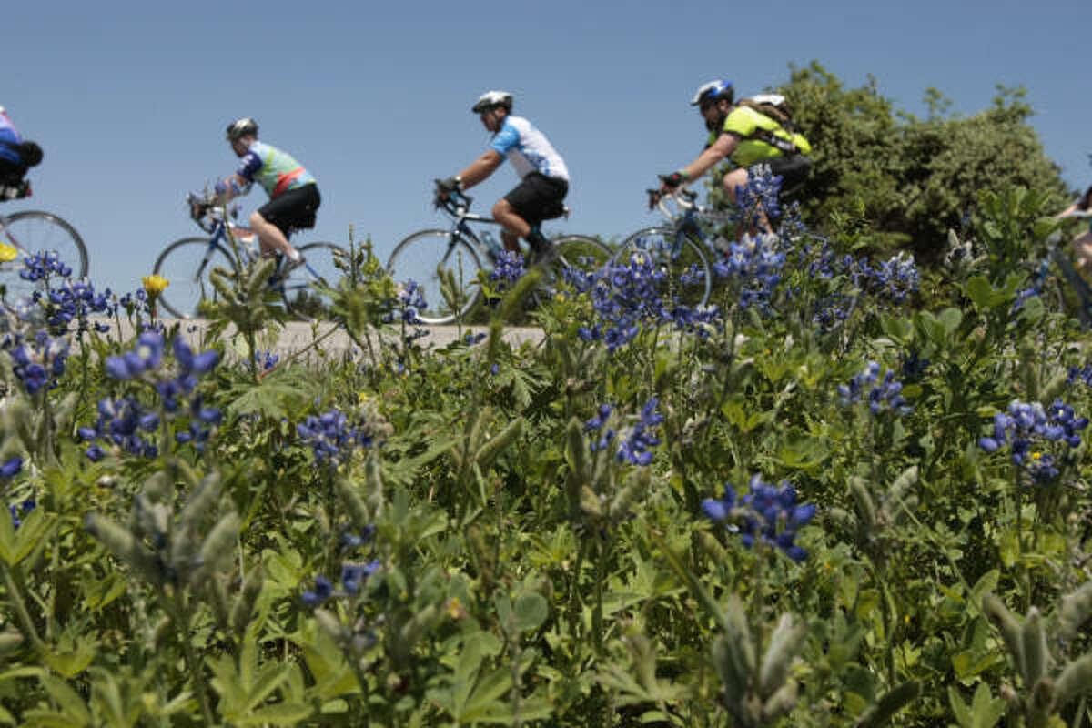 Cyclist pass a grouping of blue bonnets while traveling 159 near Fayetteville during the 2008 BP MS 150 Houston to Austin bike tour on Saturday, April 12, 2008.