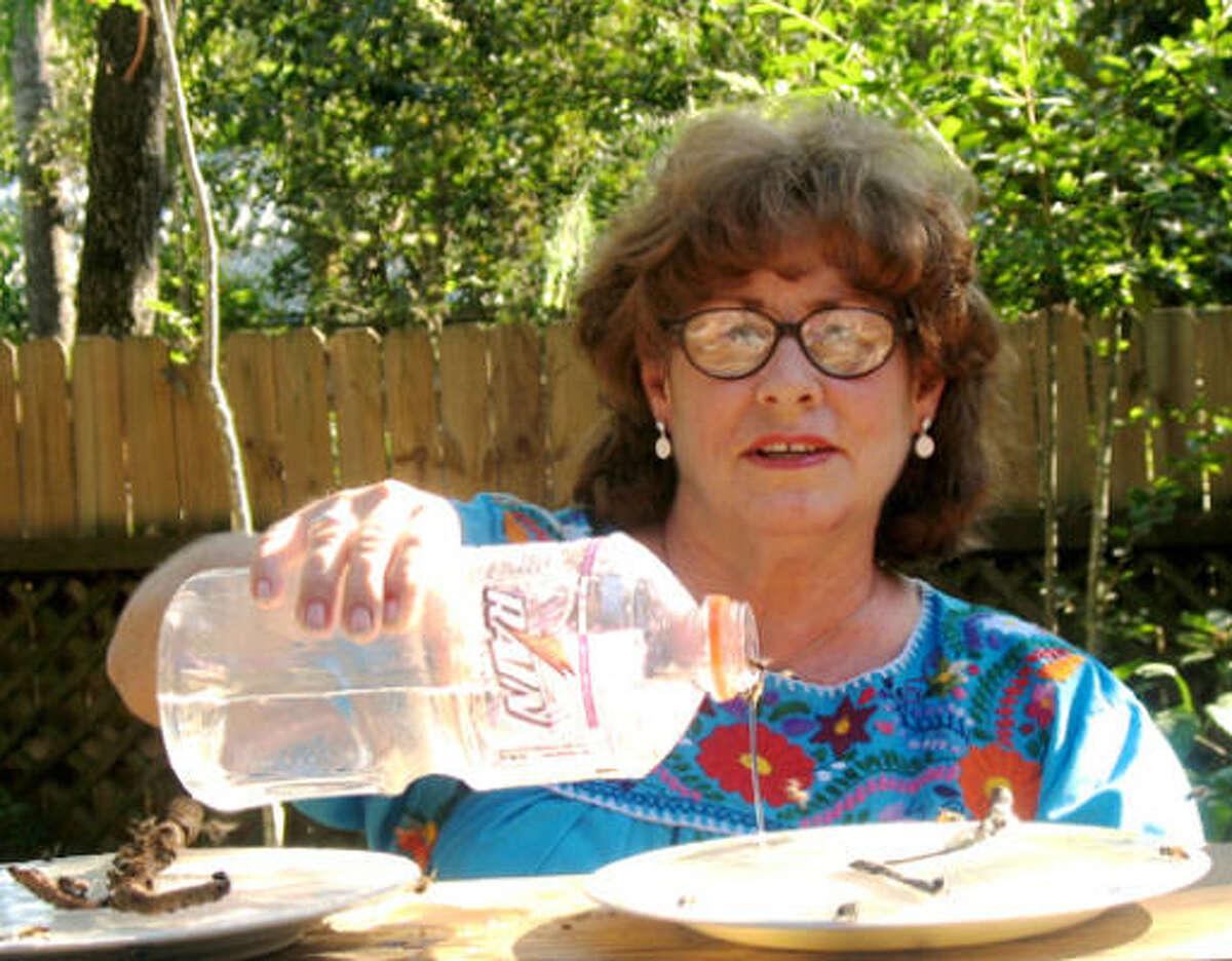 Brenda Sue Watson feeds sugar water to the bees in her garden in Hempstead.