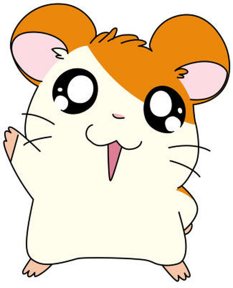 Top 5 Hamsters You D Want At Your Party Houston Chronicle