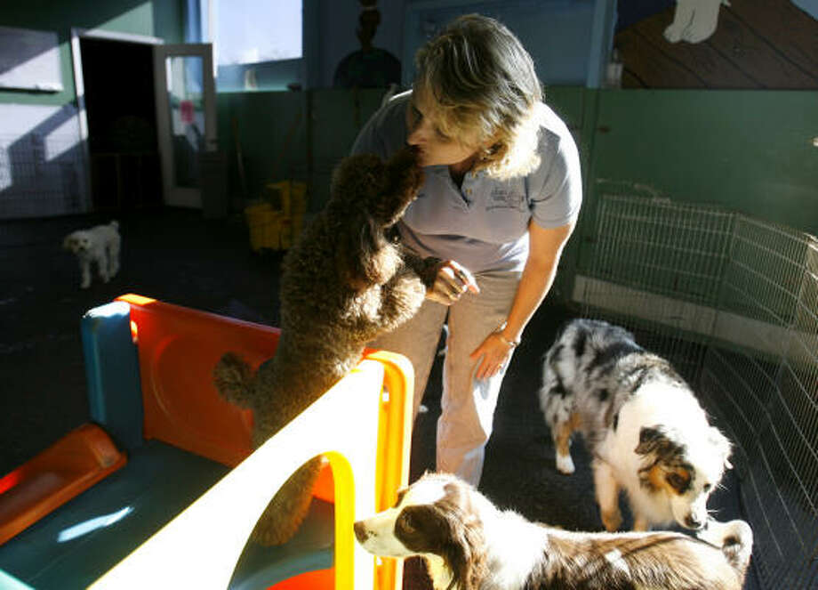 Susan Briggs, who co-owns Urban Tails, gets a kiss from Leon the poodle. Photo: Karen Warren, Chronicle