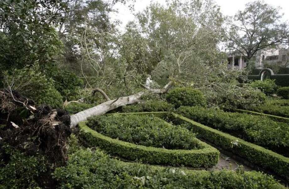 Downed trees, including a champion American holly tree, were knocked down by Hurricane Ike at the Bayou Bend Collection and Gardens. Photo: ERIC KAYNE, CHRONICLE