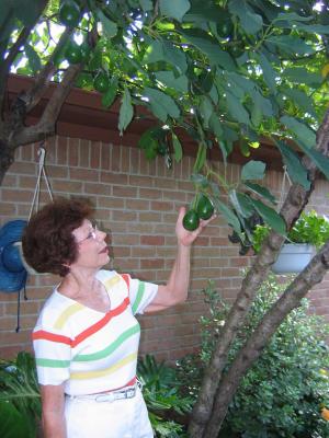 Urban Harvest Tropical Fruit Will Love Your Backyard