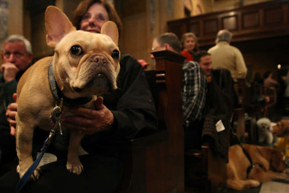 Lulu, a french bulldog, sits on the lap of Diana Anderson, as they wait for the start of the ASPCA's Blessing of the Animals Sunday at Christ Church in New York. Photo: Tina Fineberg, AP
