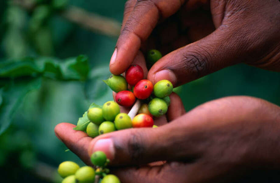 Jamaica's Blue Mountains yield world-class coffee beans and sunrise views of Cuba, 90 miles away. Photo: Jerry Alexander, Lonely Planet