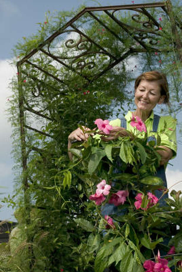 We get all flowery when discussing Arbor Gate in Tomball. Owner Beverly Welch knows plants, and she's never too busy to share her botanical knowledge with visitors. Photo: Mayra Beltran, Houston Chronicle