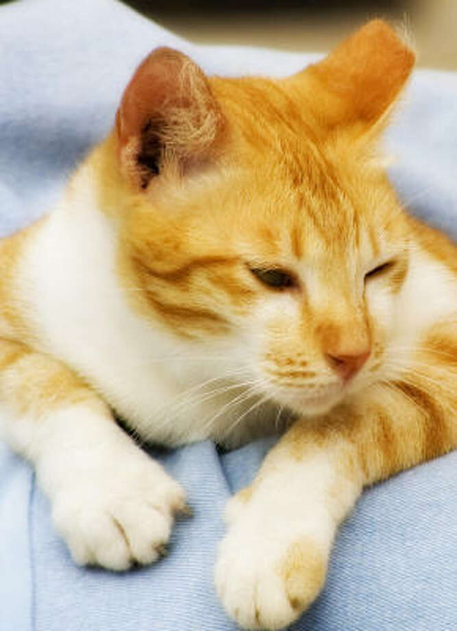 Figuring out what a cat wants is hard to do. Photo: Yee Qing Xiang, Fotolia
