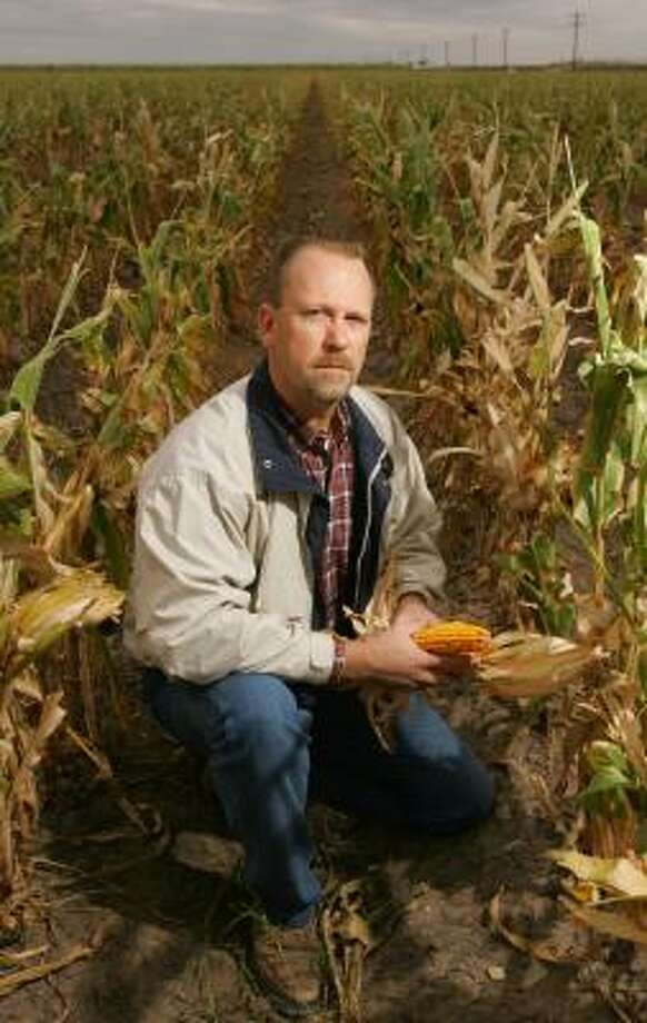 """Rio Grande Valley farmer Brian Jones, showing seed corn on his land near Edcouch, says the end of tariffs on corn is welcome. """"It has helped us just because of the extra outlet for sales,"""" he says. Photo: ALEX JONES, FOR THE CHRONICLE"""