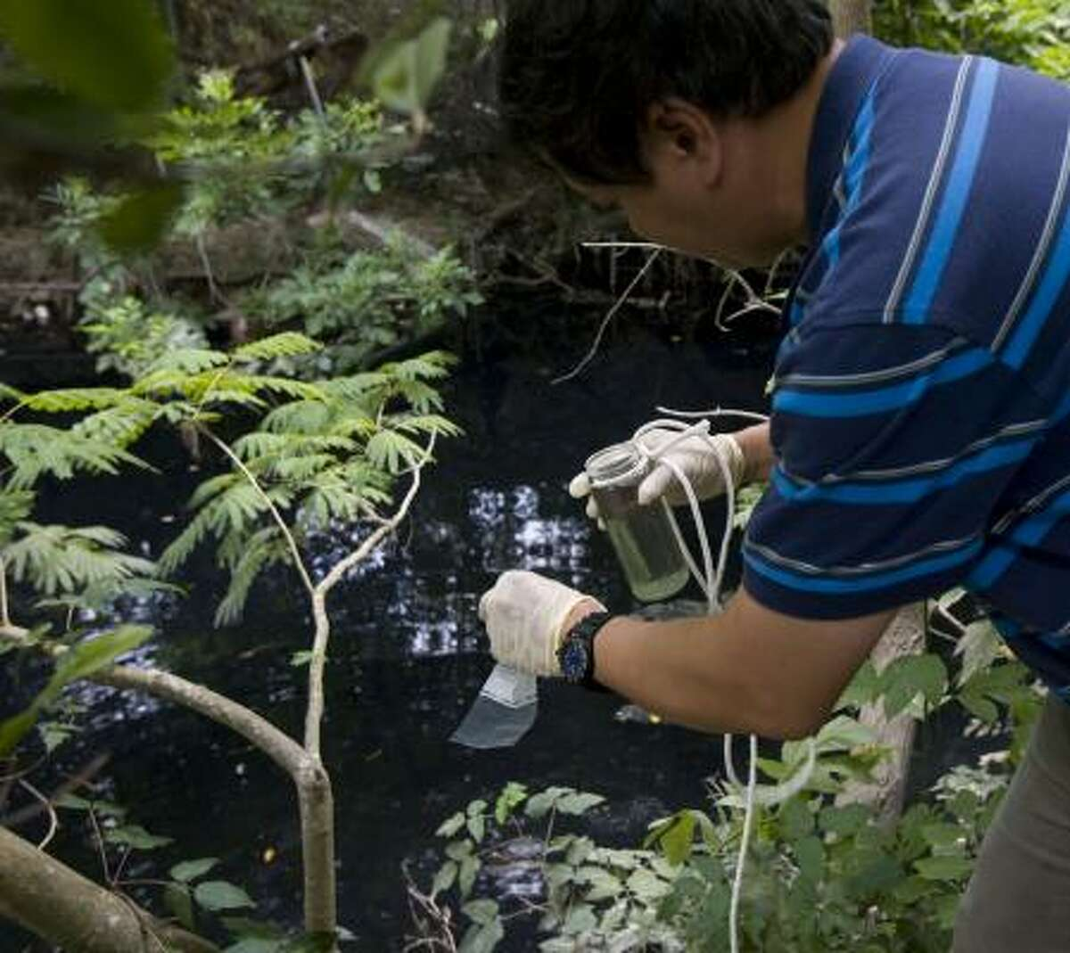 James Nguyen, a city environmental investigator, takes a water sample from Newman Branch, a Buffalo Bayou tributary.