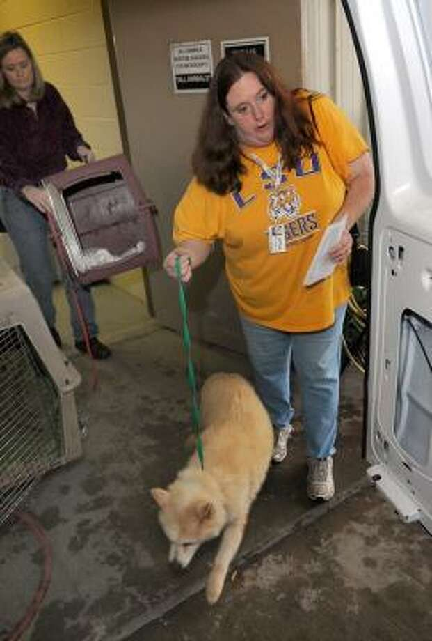 Rebecca Young, from Shreveport, La., leads a Husky mix to her van Friday as LeJeane Thompson, with the Montgomery County Animal Control shelter in Conroe, helps. Photo: JERRY BAKER, FOR THE CHRONICLE