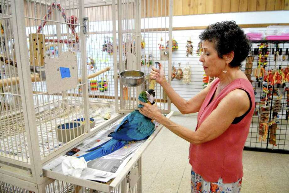 Laurie Fierst , owner of Parrots & Company, feeds a baby blue and gold Macaw in her Stamford, Conn. store on Monday August 1, 2011. Photo: Dru Nadler / Stamford Advocate