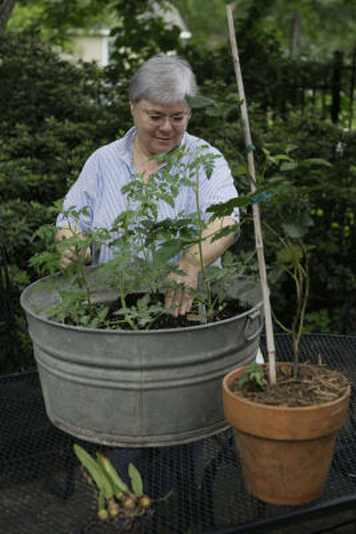 Carol Smith tends to a tub of tomato plants in her Garden Oaks yard. On the table are also a pot of blackberries and her father's amaryllis bulbs.