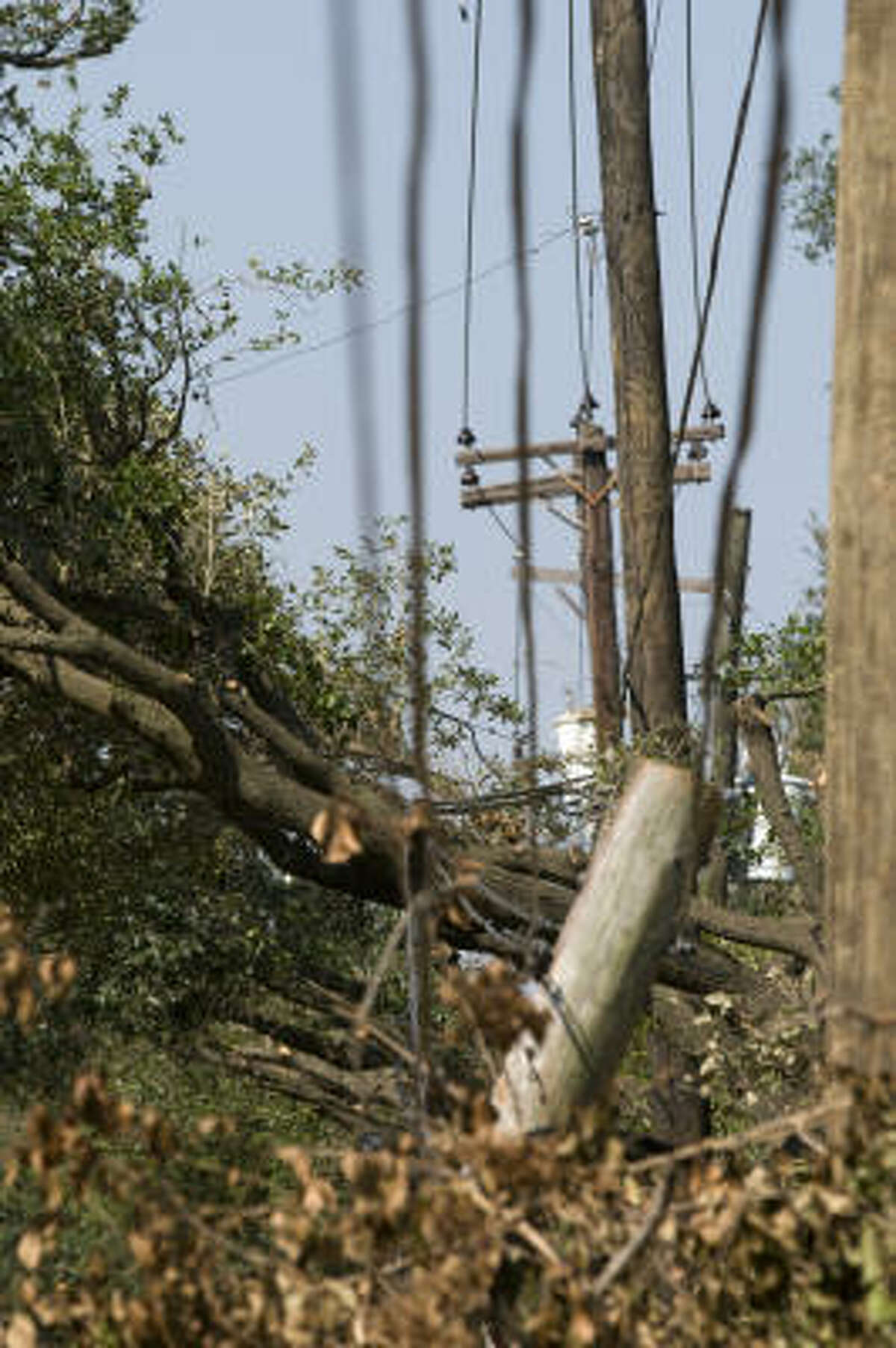 Utility lines on a broken power pole weave through trees on Bissonnet on Thursday.