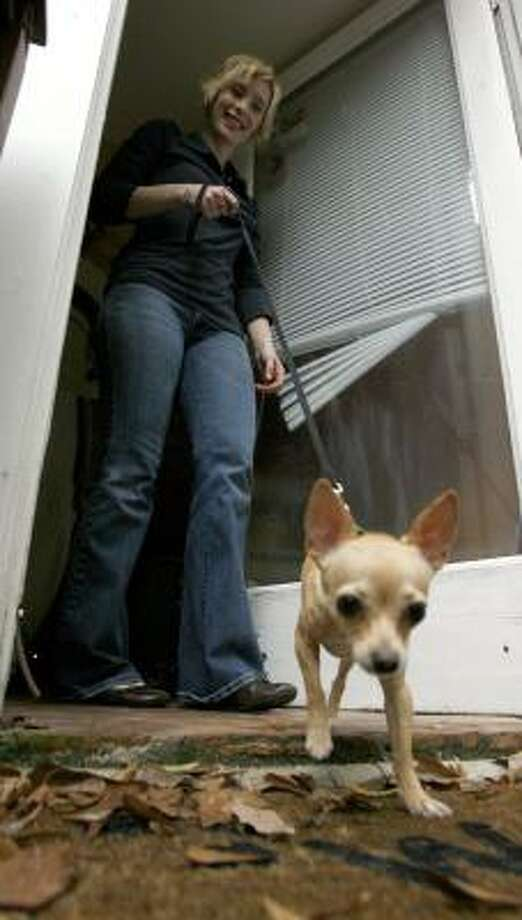 """Audrey, a Chihuahua, gets around just fine, even though one of her rear legs had to be amputated after she was hit by a car. Owner Melanie Rushé said she adopted Audrey after she saw a look in her eye that said, """"I'm going to love you forever, no matter what."""" Photo: JOHNNY HANSON PHOTOS, CHRONICLE"""