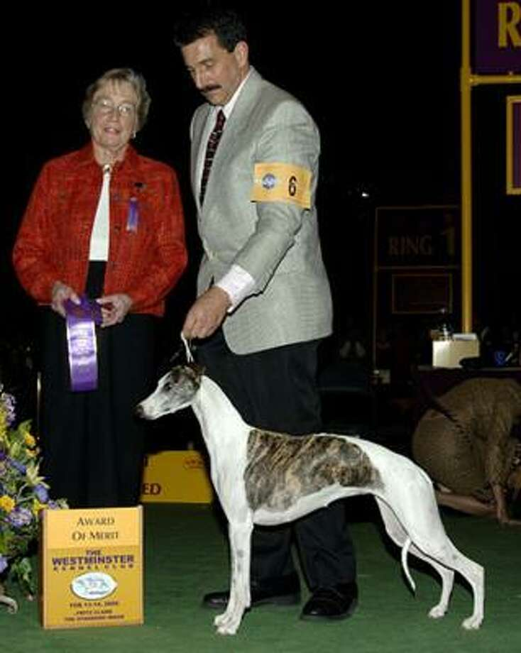 After winning the Award of Merit at last year's Westminster Kennel Club dog show, Vivi ran away at Kennedy Airport and has not been seen since. Photo: CHRONICLE FILE