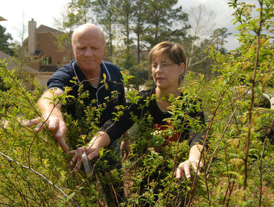Larry and Carolyn Townley search for insects at their The Woodlands home. Carolyn is a Master Gardener and works out of the Montgomery County Extension Office. She gives lectures on plant diseases and insects. Photo: David Hopper, For The Chronicle