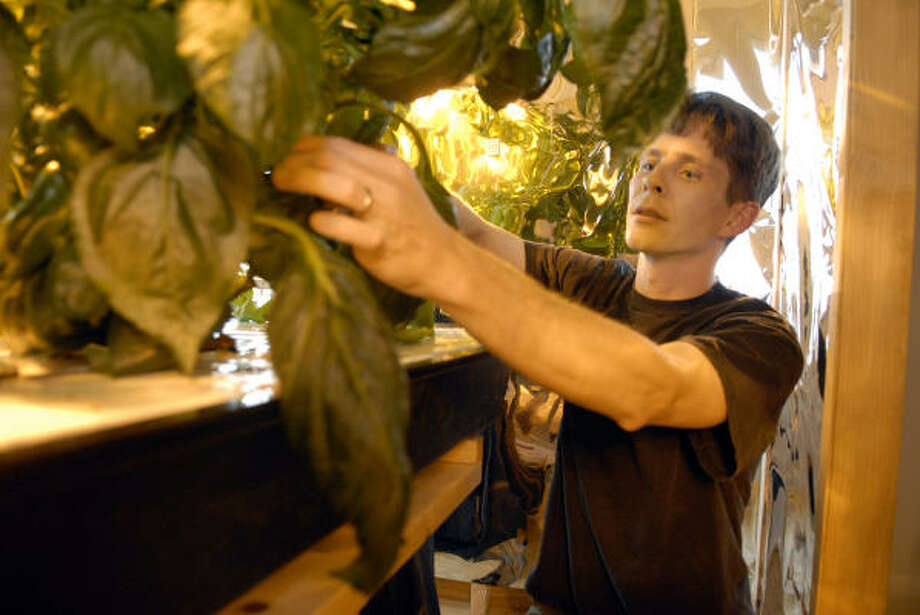 Doug Peterman works with his hydroponics garden he has in his home in Pearland. Photo: Kim Christensen, For The Chronicle