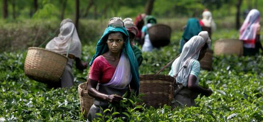 Tea workers, mostly women, earn about $1.25 a day, plus free housing and subsidized food. But when plantations close, workers lose their homes and schools. Photo: Manish Swarup, AP
