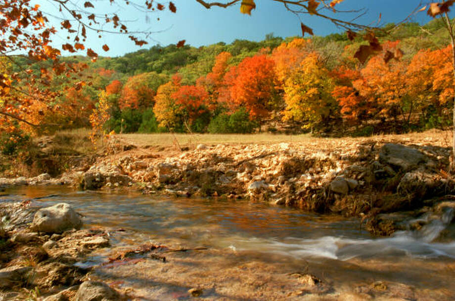 Stands of bigtooth maples make Lost Maples State Natural Area near Vanderpool one of the best places in Texas for leaf-peeping. Photo: E. Joseph Deering, Chronicle File