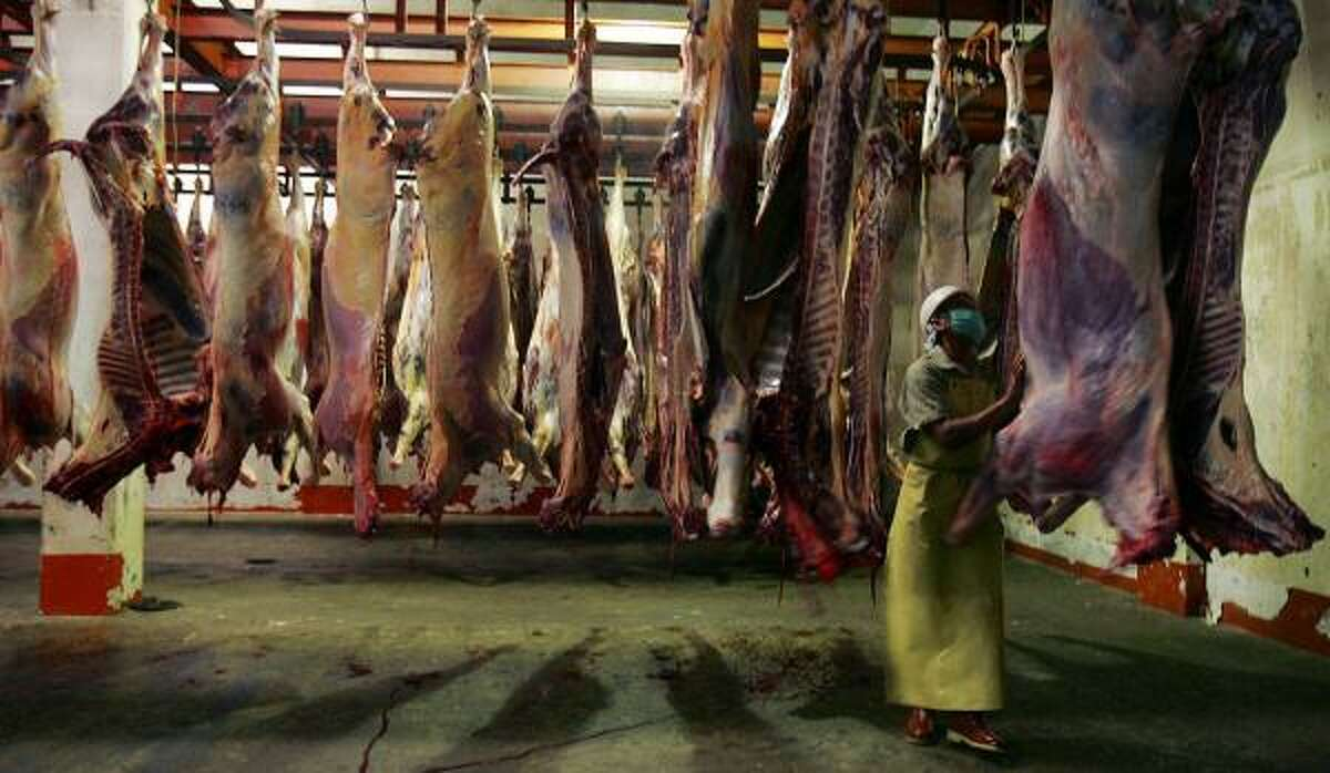 The Juarez municipal slaughterhouse refrigerates carcasses for at least 24 hours before releasing them to markets. Horse meat is considered a delicacy in places like France, Japan and Russia.