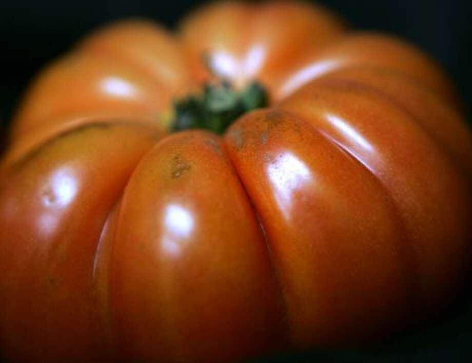 An UglyRipe tomato is ready in Philadelphia. Photo: JACQUELINE LARMA, AP