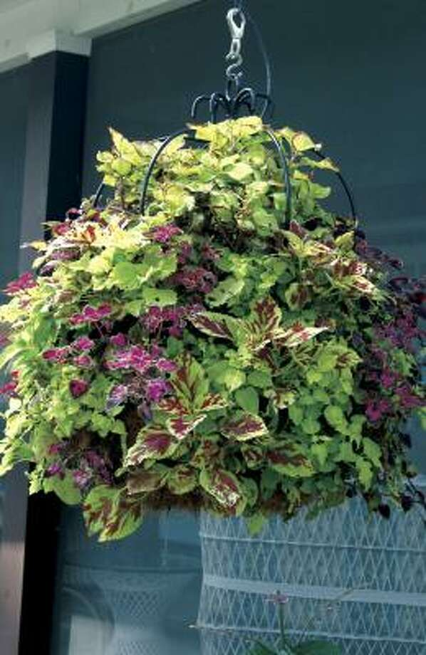 How To Make A Hanging Basket Houston Chronicle