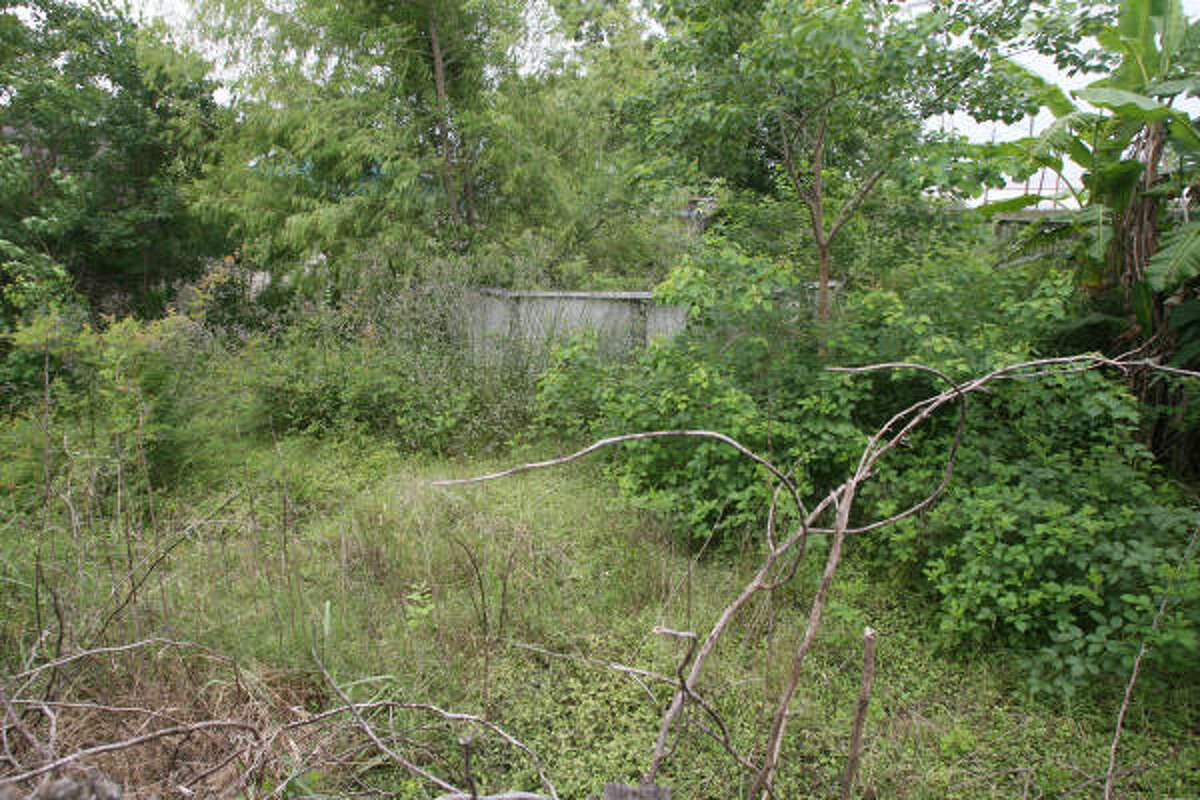 The overgrown backyard of Linda A. Ballew's home at 10418 Glenkird Drive that has caused a years-long battle between her and her neighbor.