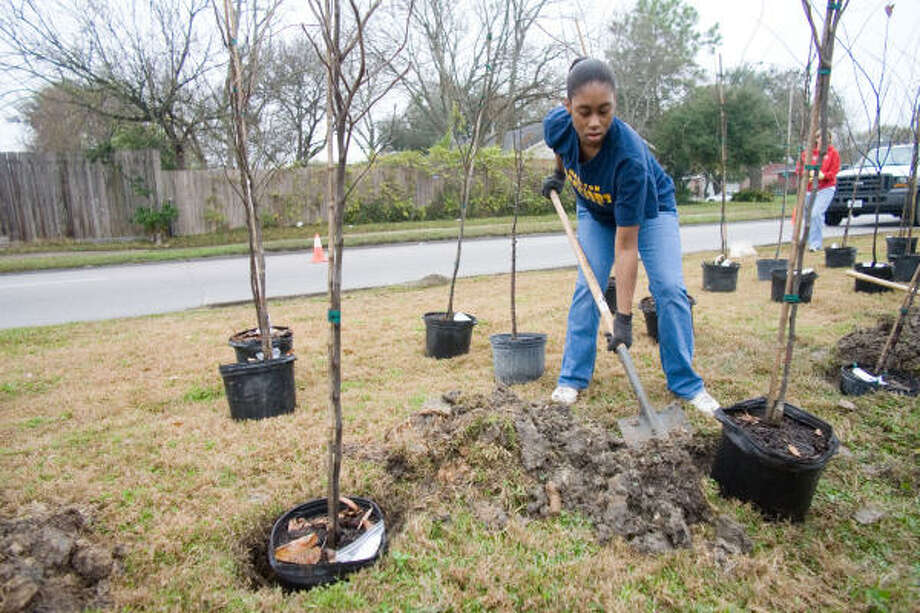 Brittnei Earl helps plant trees in the Wilcrest esplanade at Carvel in January 2007. Photo: R. Clayton McKee, For The Chronicle