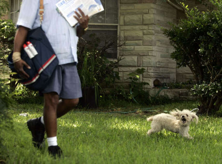 This letter carrier, who says he received two dog bites on his route, carries a repellent spray in the case of an attack. Photo: Johnny Hanson, For The Chronicle