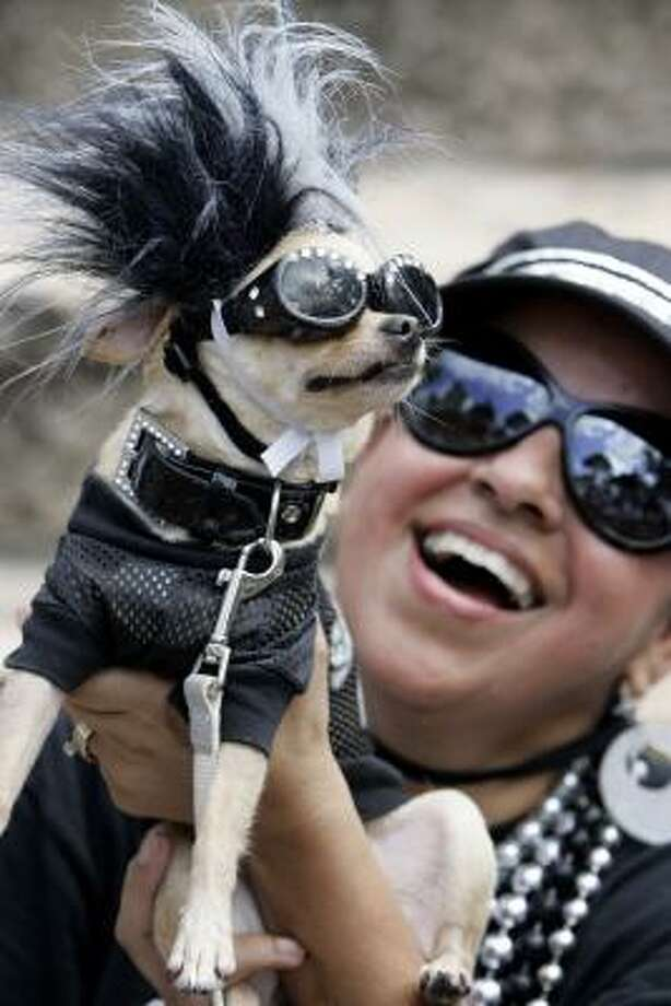 Dennis Lindsey can look forward to strong fan support in San Antonio, Spurs fan Thelma Rodriguez brought her dog, Coco, to Sunday's championship parade. Photo: Eric Gay, AP