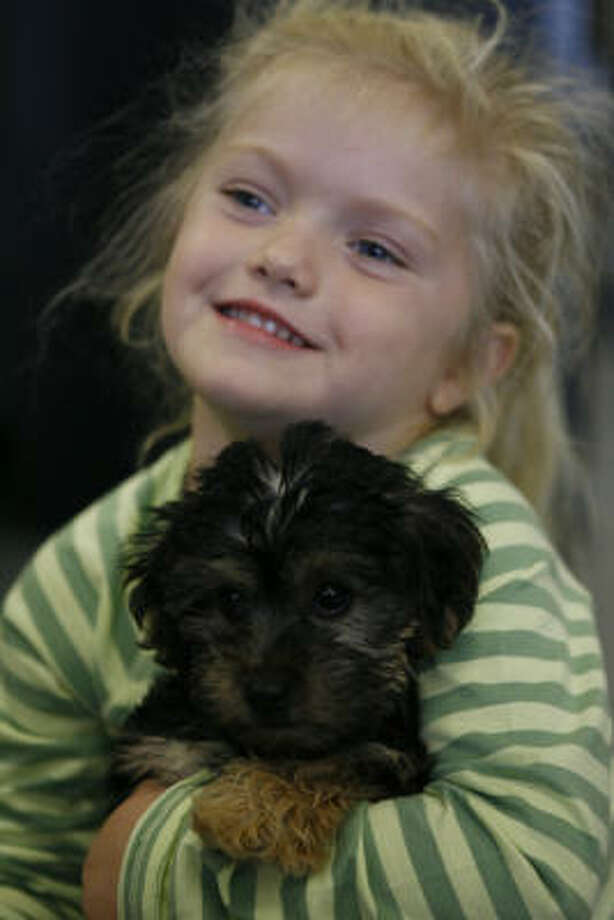 Jessica Crocker, 4, of Sugar Land and her puppy, Coco, a 10-week-old, a Morkie (designer dog mix of Yorkshire terrier and Maltese) at the Wellness Center at Houston Humane Society. HHS says that when getting a dog for a child the temperament of the dog should be considered. Photo: Melissa Phillip, Chronicle