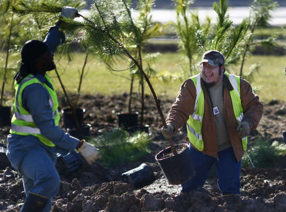Workers position trees Thursday in preparation for Saturday's Houston Area Freeway and Forestation Project. Photo: Steve Ueckert, Chronicle