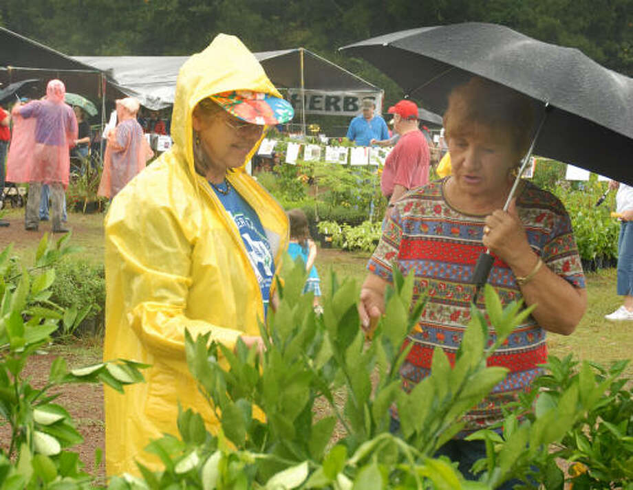 Montgomery County Master Gardener Denise Graham answers a question from Rita Robbins, Willis, during a Master Gardeners fall plant sale earlier this month. Photo: David Hopper, For The Chronicle