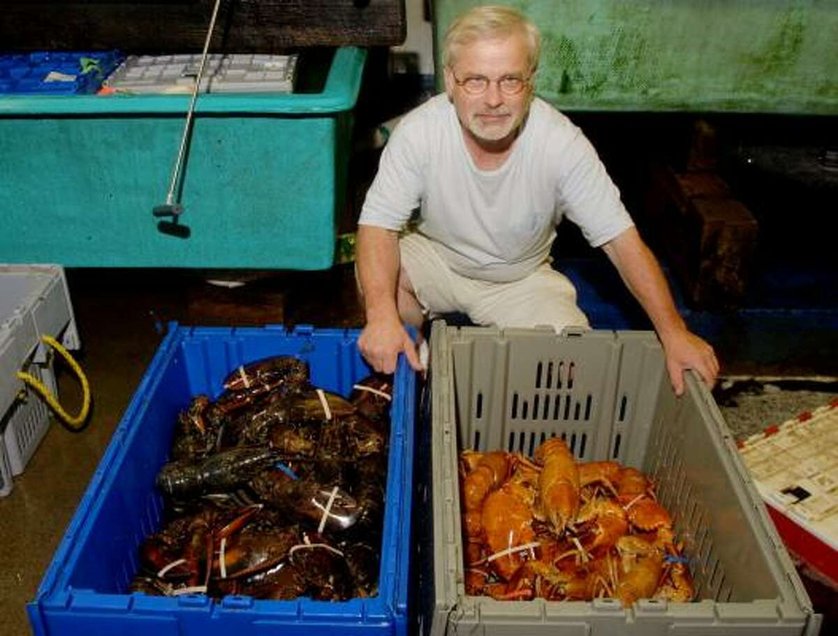 Mike Goslin, owner of The Finest Kind Fish Market, in York, Maine, poses with a crate of reddish tan lobsters next to a crate of normal lobsters, Friday, Aug. 22, 2003. Goslin has seen rare blue lobsters. But never in his 27 years in the business had he ever laid eyes on lobsters like the ones he recently received.