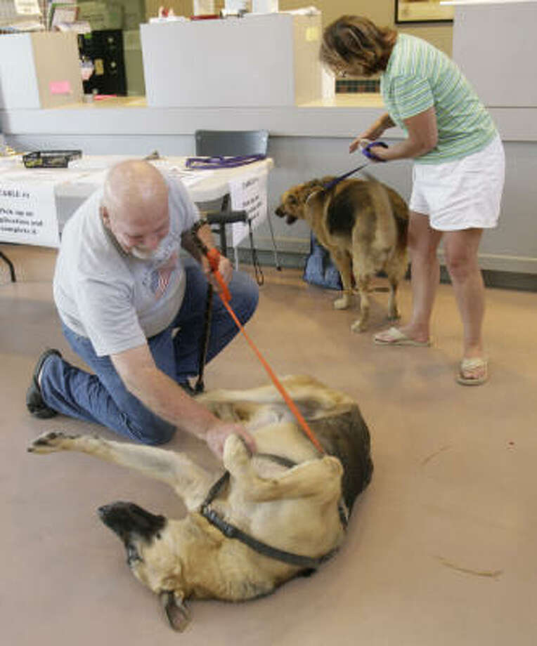 Galveston residents Thomas and Debra Scales are reunited with their German shepherds, King and Heidi, at the Houston SPCA on Monday, Sept. 23. The Scales said they own a very small vehicle that forced them to leave the dogs behind when they fled Hurricane Ike. Photo: Julio Cortez, Chronicle