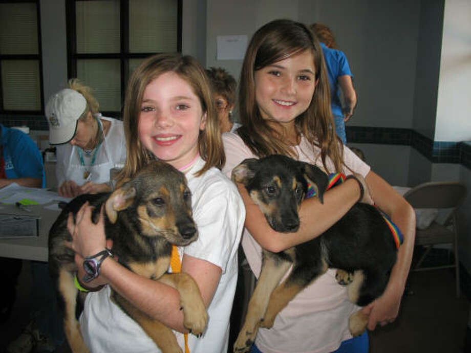 Peyton and Kallie Brown pose with the foster pups that they chose at the Houston SPCA because the dogs were also sisters. Refugees from Hurricane Ike, the dogs can be returned to the shelter after 10 days, but the girls are hoping to persuade their father to let them keep the dogs if their owners cannot be found. Photo: Lana Berkowitz, Chronicle