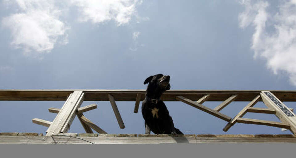 A dog waits on a porch to be rescued at Crystal Beach, on the Bolivar Peninsula Sept. 18. A group be