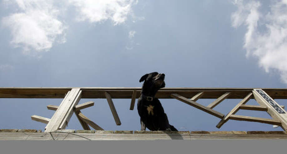 A dog waits on a porch to be rescued at Crystal Beach, on the Bolivar Peninsula Sept. 18. A group began a search and rescue in the area destroyed by Hurricane Ike for dogs, cats and any other pets. Photo: Eric Gay, AP