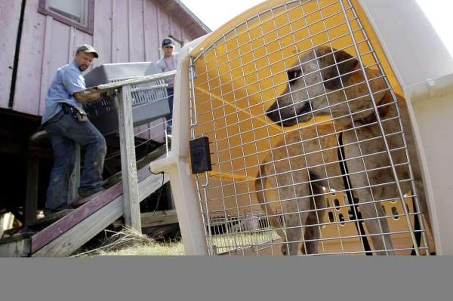 Richard Crook, left, and Amy Snider rescue pets from a home at Crystal Beach Sept. 18. Photo: Eric Gay, AP