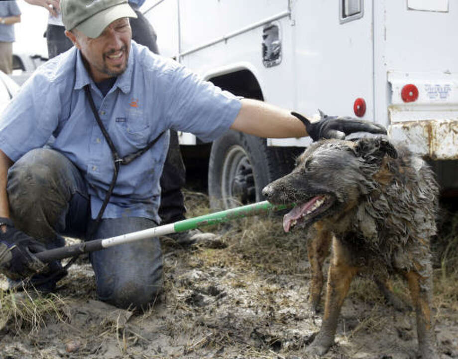 Richard Crook works to calm a dog he rescued at Crystal Beach Sept. 18. Crook and others searched the area destroyed by Hurricane Ike for dogs, cats and any other pets. Photo: Eric Gay, AP