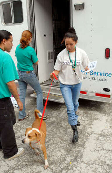 Cystie Vasquez of the SPCA Dallas helps unolad dogs brought from Galveston to the Houston SPCA.