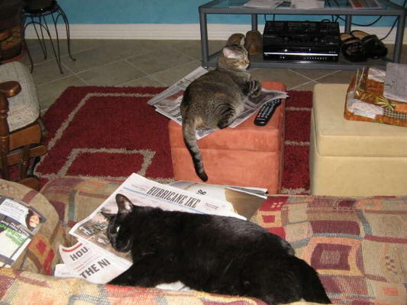 Hurricane fatigue: My cats, Beauty and Shadow, have had enough.