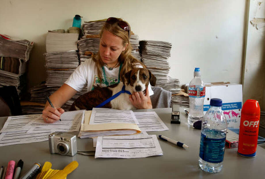 Emily Niemeier from Denver checks in a stray dog at the animal shelter Wednesday. Photo: Scott Olson, Getty Images