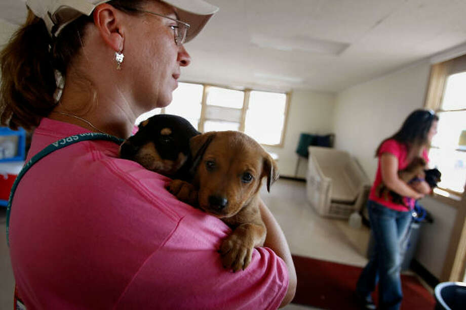 Workers care for puppies at the shelter. Photo: Scott Olson, Getty Images