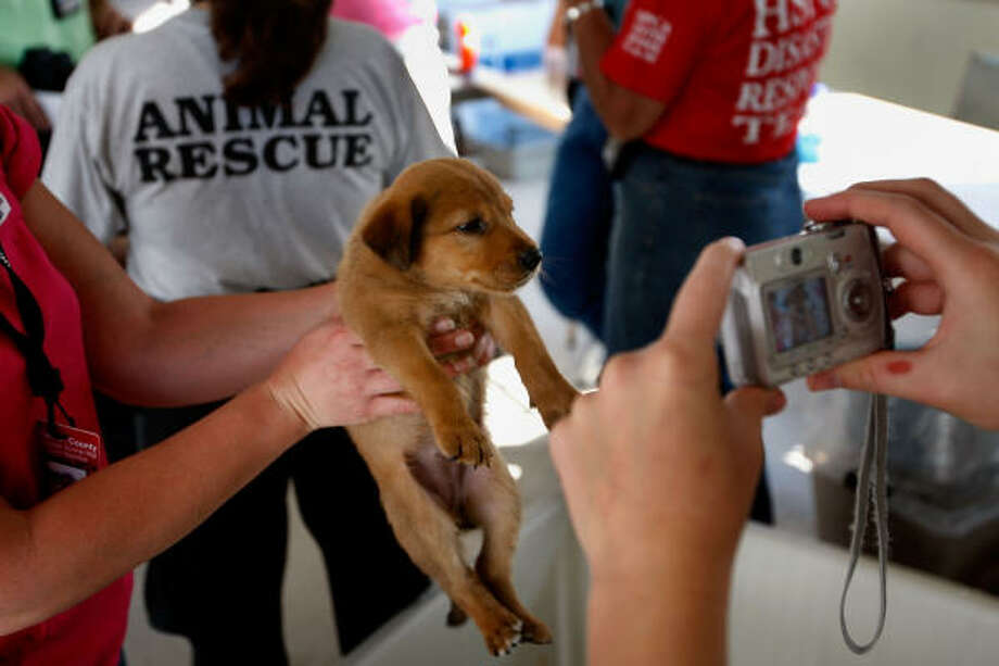 Animals at the shelter are photographed to help with locating their owners. Photo: Scott Olson, Getty Images