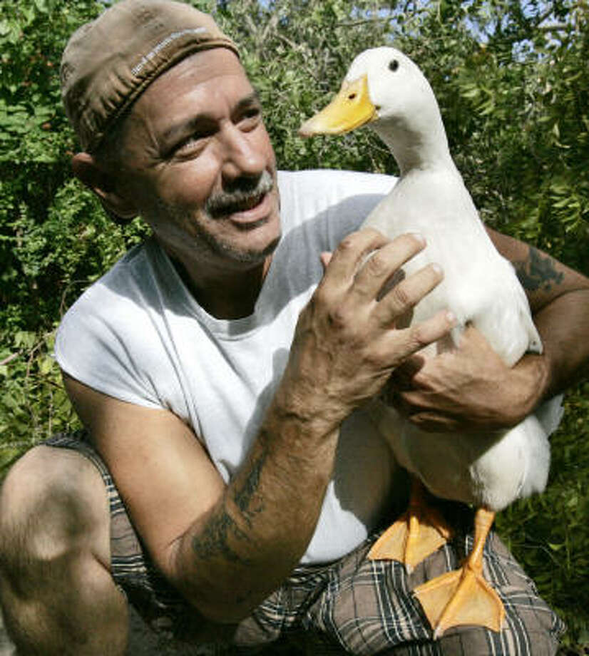 Dennis Garcia is reunited Tuesday with his pet duck, Bo, who stayed in his backyard in Seabrook during Hurricane Ike. Photo: Frank Franklin II, AP