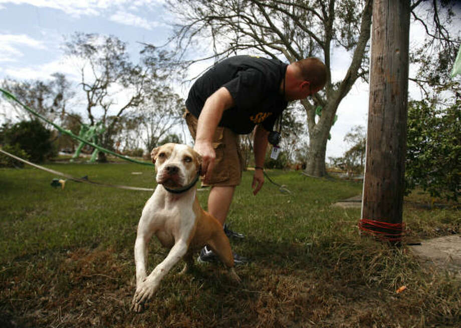Chambers County official Quinten Adams checks on a tethered dog on Oak Island Monday. Photo: Sharon Steinmann, Chronicle