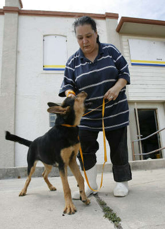 Lucy Rangel-Click walks a dog at a Galveston animal clinic after Hurricane Ike hit. Over the weekend, police dropped off 22 dogs and cats rescued from the debris. Photo: Kevin M. Cox, AP