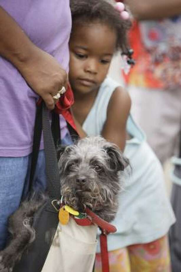 A dog named Blackie peeks out from a handbag as Joyce Earls and her daughter, Derica Williams, 4, wait for an evacuation bus from Ball High School on Sunday. Photo: Melissa Phillip, Chronicle