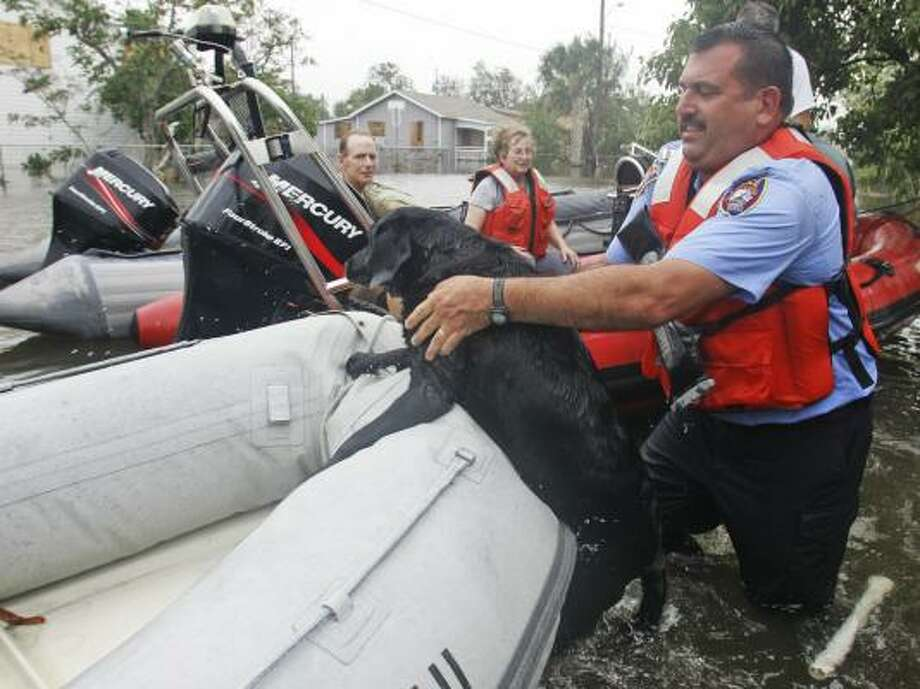 A dog is lifted into a rescue boat on Galveston's West End Saturday. Photo: LM Otero, AP