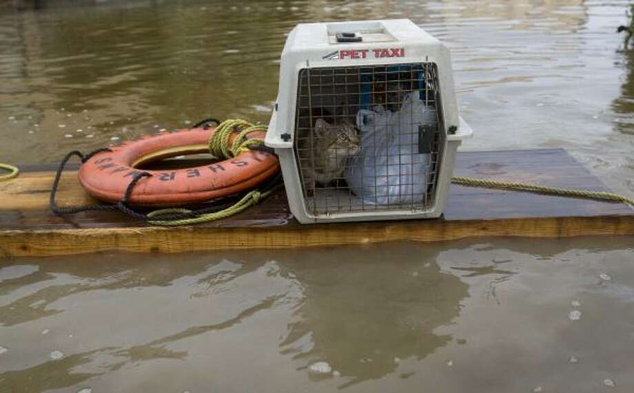 Kristin Upp's cat, Toonces, rides in a pet taxi as Upp floats her cat out of Galveston's flooded Strand area on Saturday. Photo: Brett Coomer, Chronicle